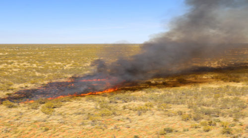 A carbon story for the desert – exploring carbon reduction projects across Australia's deserts